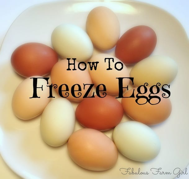 How To Freeze Eggs Fabulous Farm