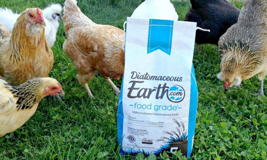 We Love Diatomaceous Earth (and You Should Too!)